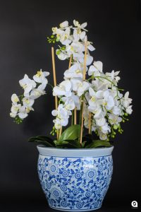 White Orchid in big blue patterned vase - 95cm