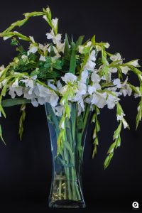 White Gladiolas in tall twisted glass vase - 85cm