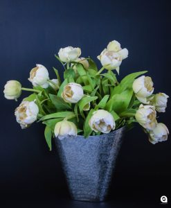 Cream Tulips in gold/silver vase - 43cm