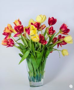 Yellow  + red tulips in small twisted glass vase - 35cm