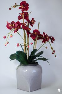 Red Orchid in beige vase - 60cm