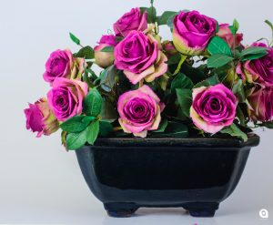 Cerise dark Roses in blue vase - 35cm