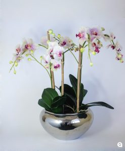 Pink Orchids in round silver vase - 62cm