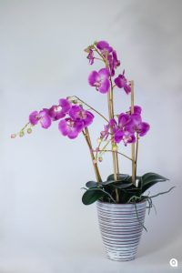 Purple Orchid in purple vase - 70cm